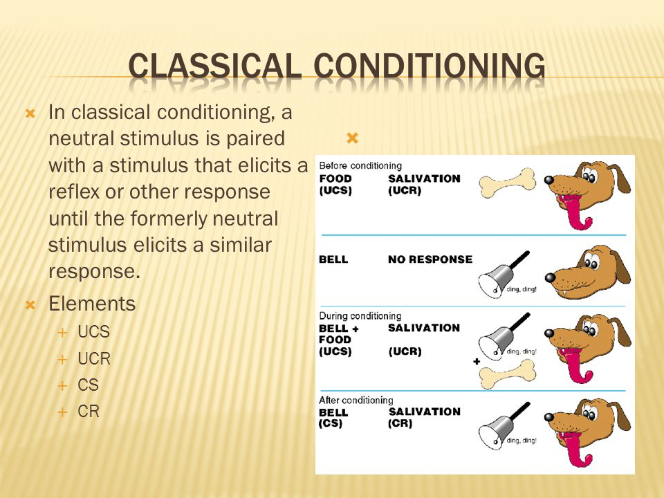  In classical conditioning, a neutral stimulus is paired with a stimulus that elicits a reflex or other response until the formerly neutral stimulus