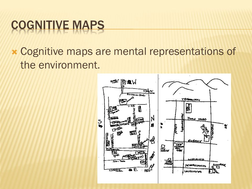  Cognitive maps are mental representations of the environment.