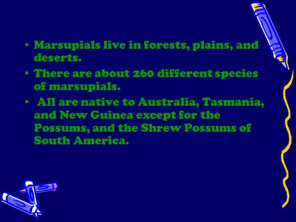 Possums Wallabies KangaroosKoalasSugar Gliders Wombats Tasmanian Devils Bandicoots