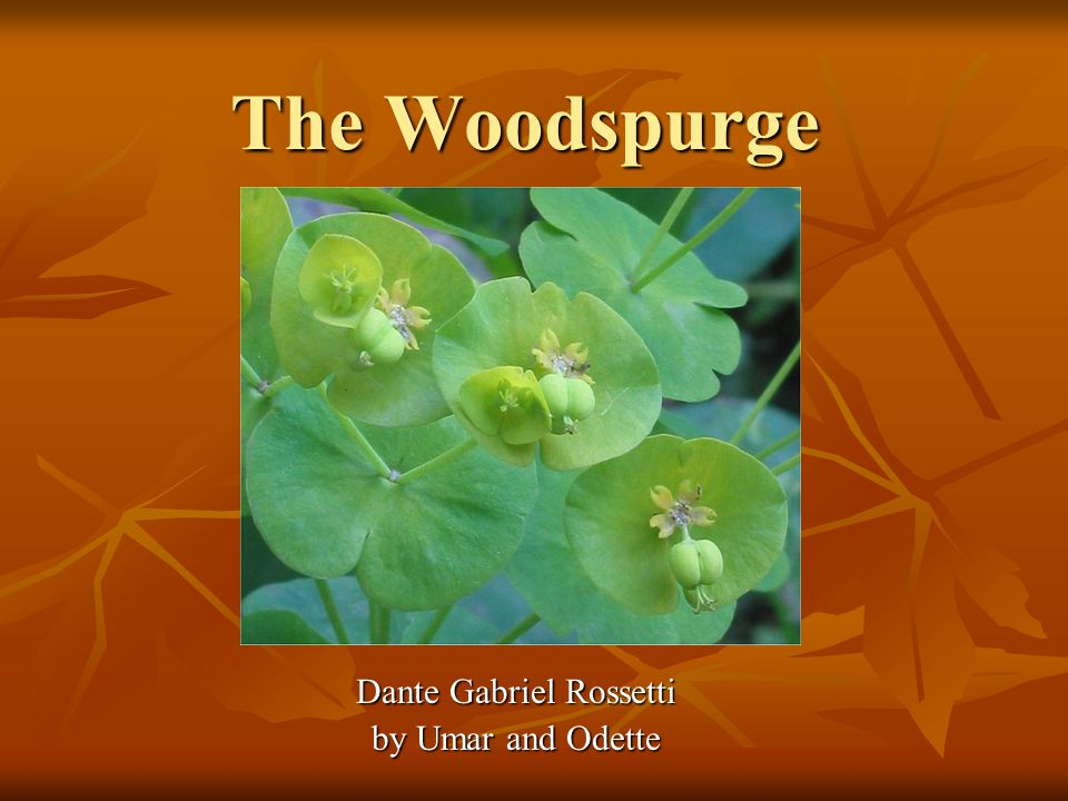 The Woodspurge Dante Gabriel Rossetti by Umar and Odette