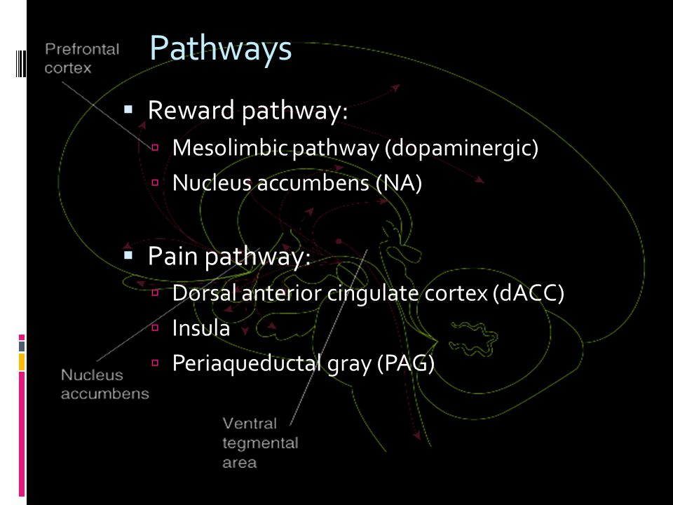 Pathways  Reward pathway:  Mesolimbic pathway (dopaminergic)  Nucleus accumbens (NA)  Pain pathway:  Dorsal anterior cingulate cortex (dACC)  Insula  Periaqueductal gray (PAG)