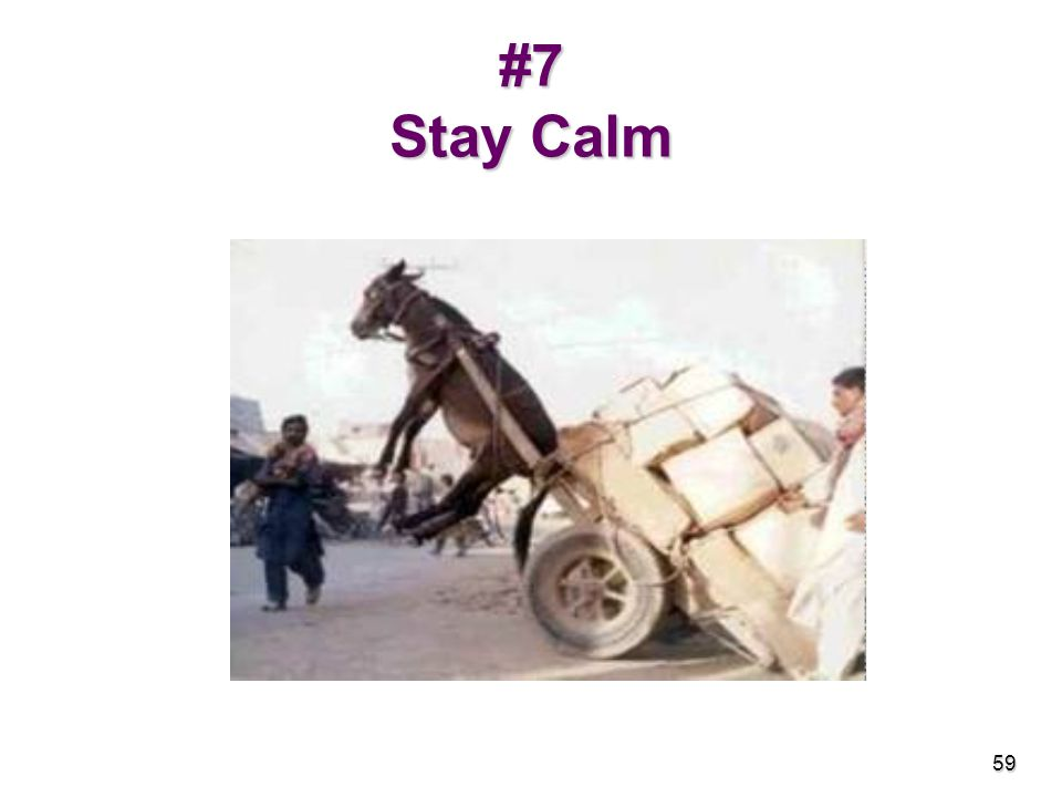 #7 Stay Calm 59