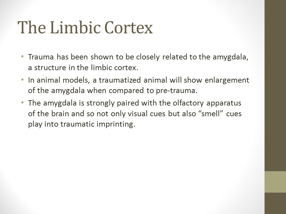 The Limbic Cortex Trauma has been shown to be closely related to the amygdala, a structure in the limbic cortex.