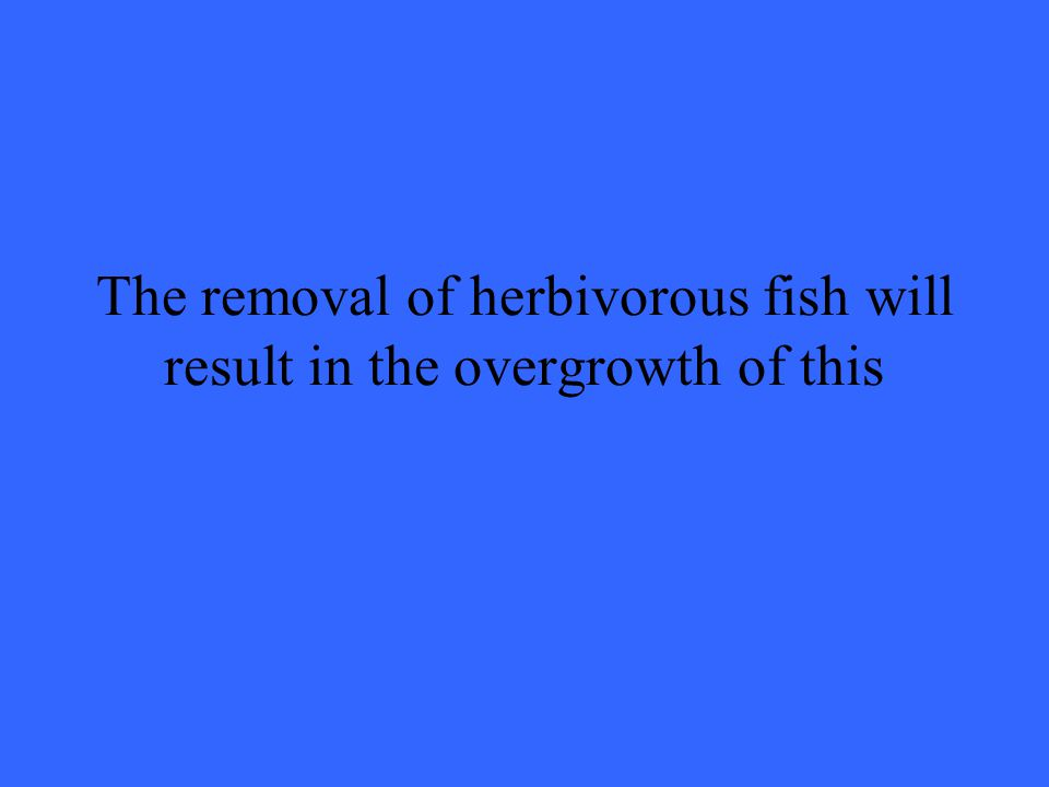 The removal of herbivorous fish will result in the overgrowth of this