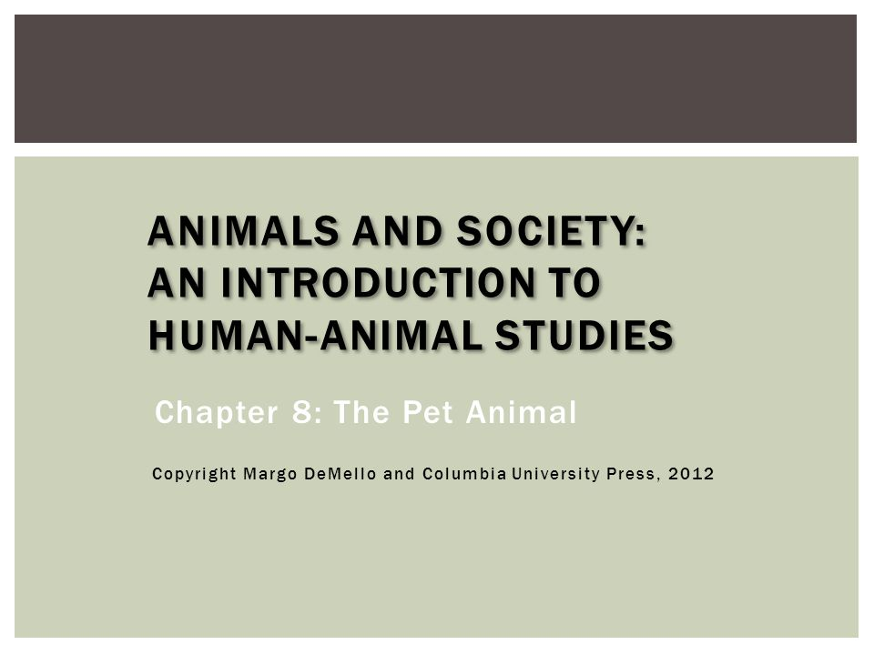  Pet animals suffer from cruelty and neglect.