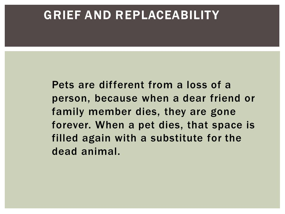 Pets are different from a loss of a person, because when a dear friend or family member dies, they are gone forever. When a pet dies, that space is fi