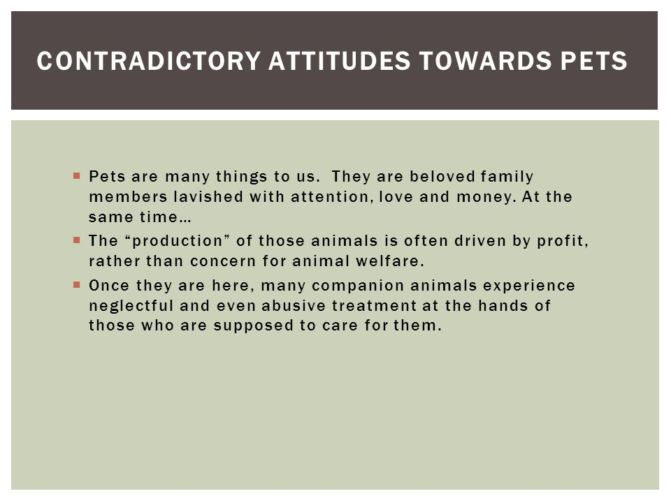 " Pets are many things to us. They are beloved family members lavished with attention, love and money. At the same time…  The ""production"" of those a"