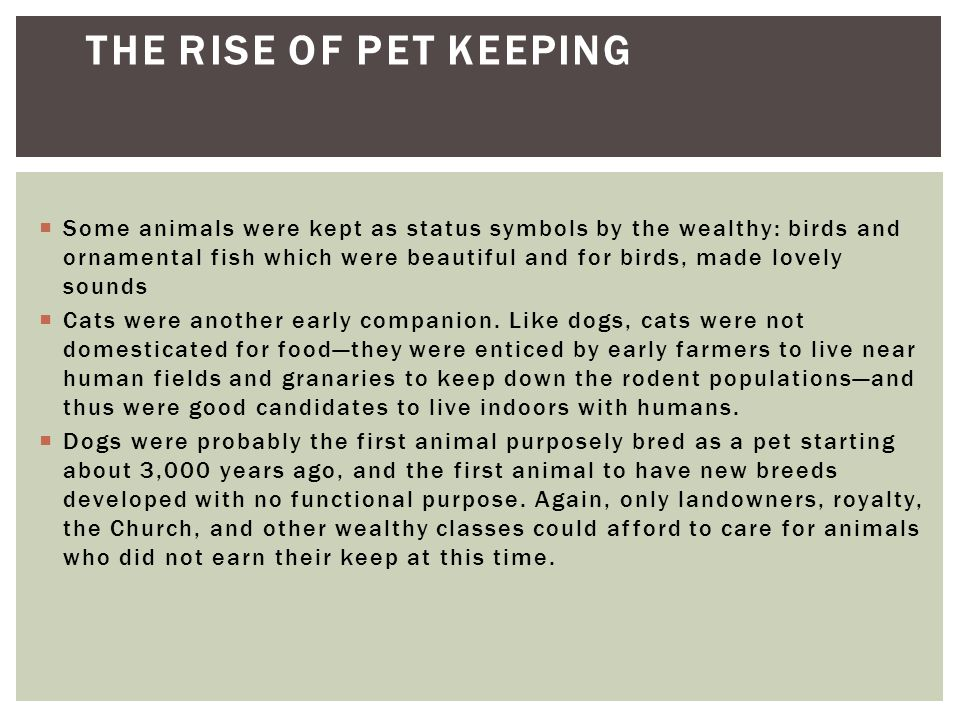  Pet-keeping as we know it today did not really emerge until the nineteenth century, when enough people had the disposable resources to keep animals only for companionship.