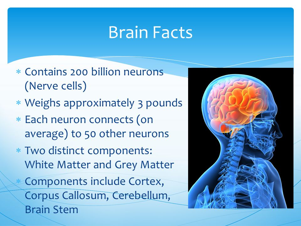 Brain Facts  Contains 200 billion neurons (Nerve cells)  Weighs approximately 3 pounds  Each neuron connects (on average) to 50 other neurons  Two distinct components: White Matter and Grey Matter  Components include Cortex, Corpus Callosum, Cerebellum, Brain Stem