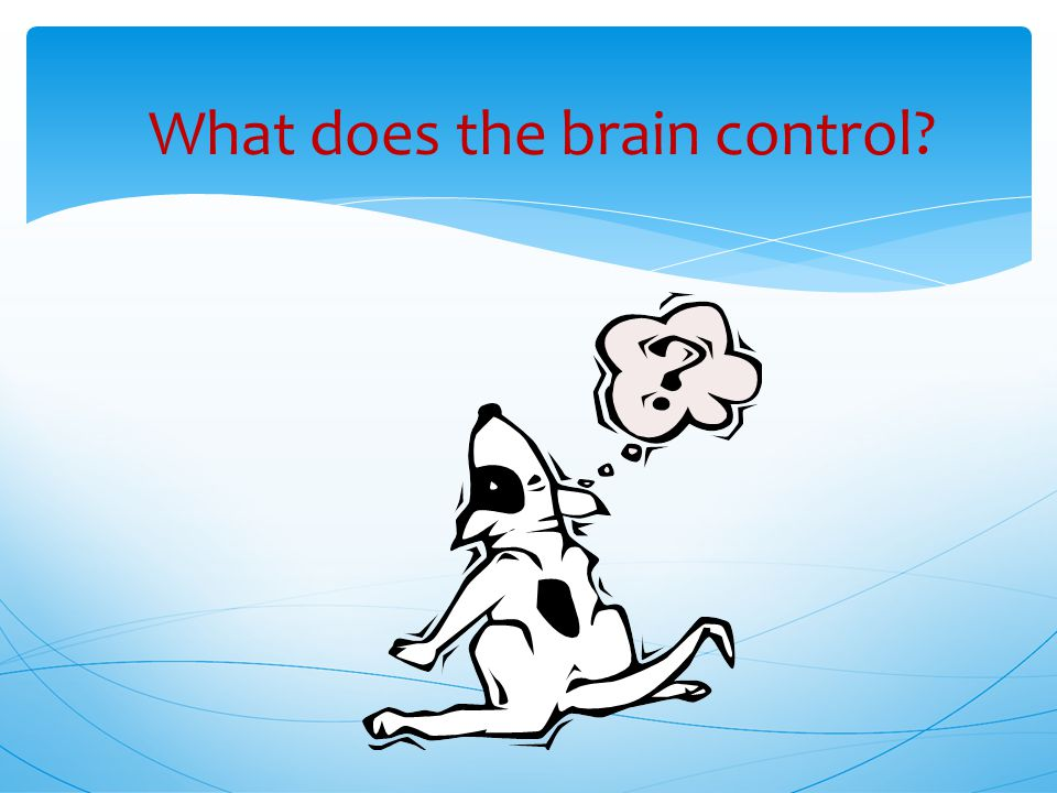 What does the brain control