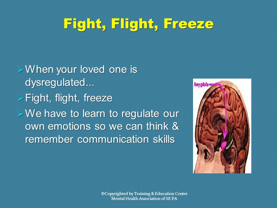 Fight, Flight, Freeze  When your loved one is dysregulated...