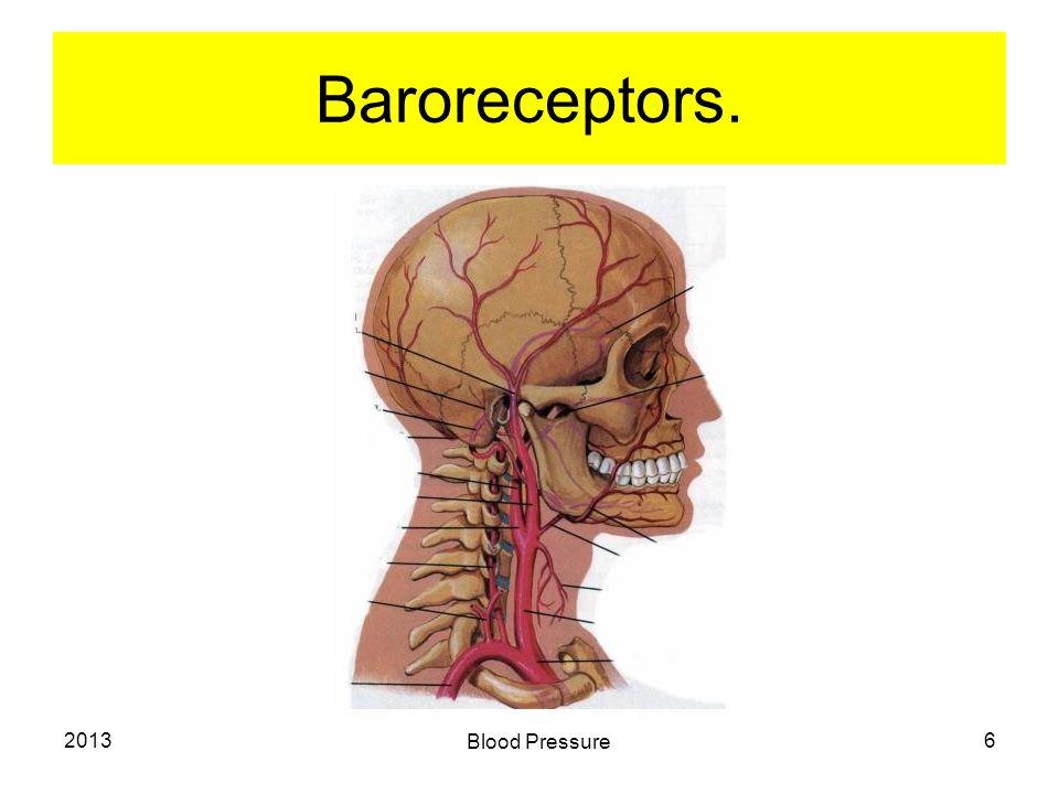 2013 Blood Pressure 6 Baroreceptors.