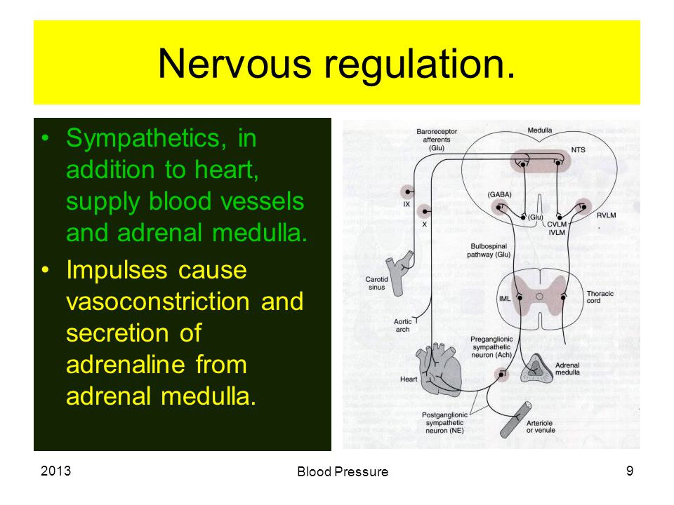 2013 Blood Pressure 10 Feed back regulation.Cardio Inhibitary Centre.