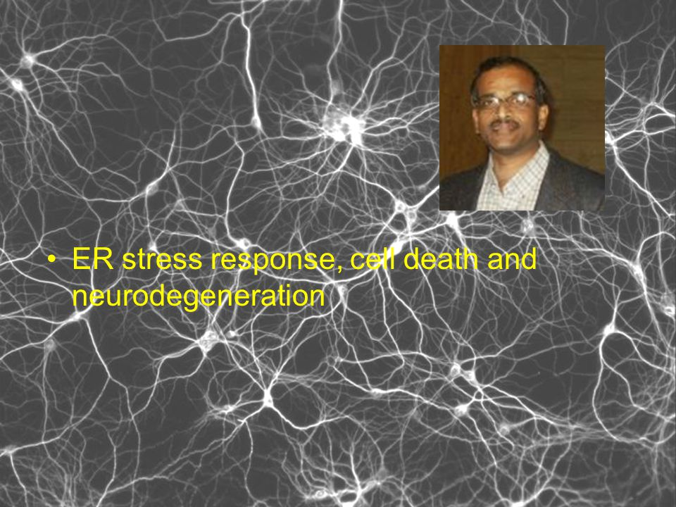 ER stress response, cell death and neurodegeneration