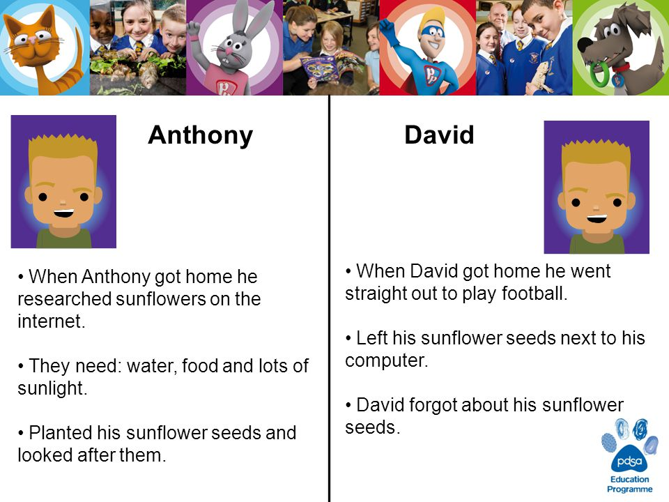 After a 8 weeks Anthony and David had very different results from growing their sunflower seeds.
