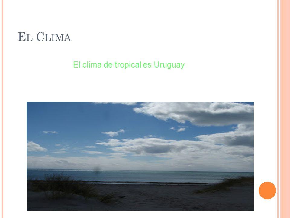 E L C LIMA El clima de tropical es Uruguay