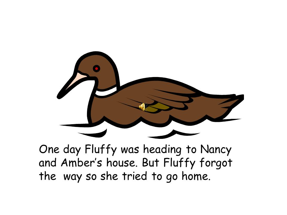 Once there lived a duck named Fluffy.