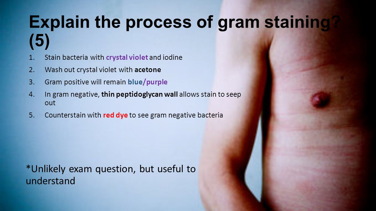 Explain the process of gram staining? (5) 1.Stain bacteria with crystal violet and iodine 2.Wash out crystal violet with acetone 3.Gram positive will