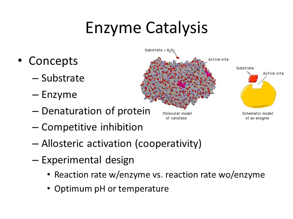 Enzyme Catalysis Concepts – Substrate – Enzyme – Denaturation of protein – Competitive inhibition – Allosteric activation (cooperativity) – Experiment