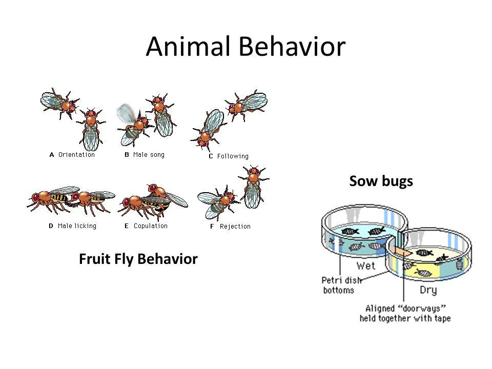 Animal Behavior Fruit Fly Behavior Sow bugs