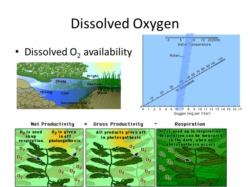 Dissolved Oxygen Dissolved O 2 availability