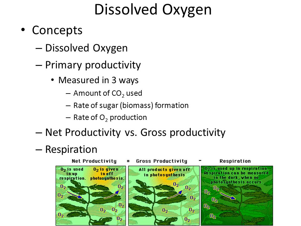 Dissolved Oxygen Concepts – Dissolved Oxygen – Primary productivity Measured in 3 ways – Amount of CO 2 used – Rate of sugar (biomass) formation – Rat