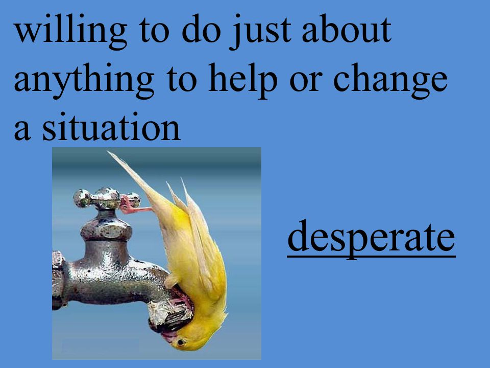 willing to do just about anything to help or change a situation desperate