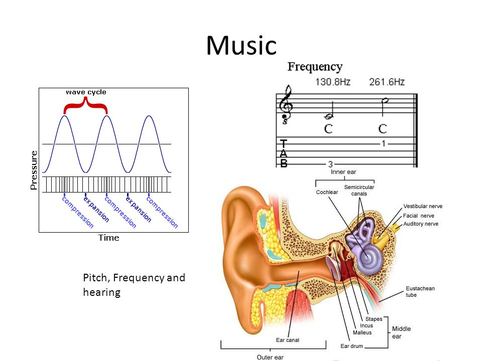 Music Pitch, Frequency and hearing