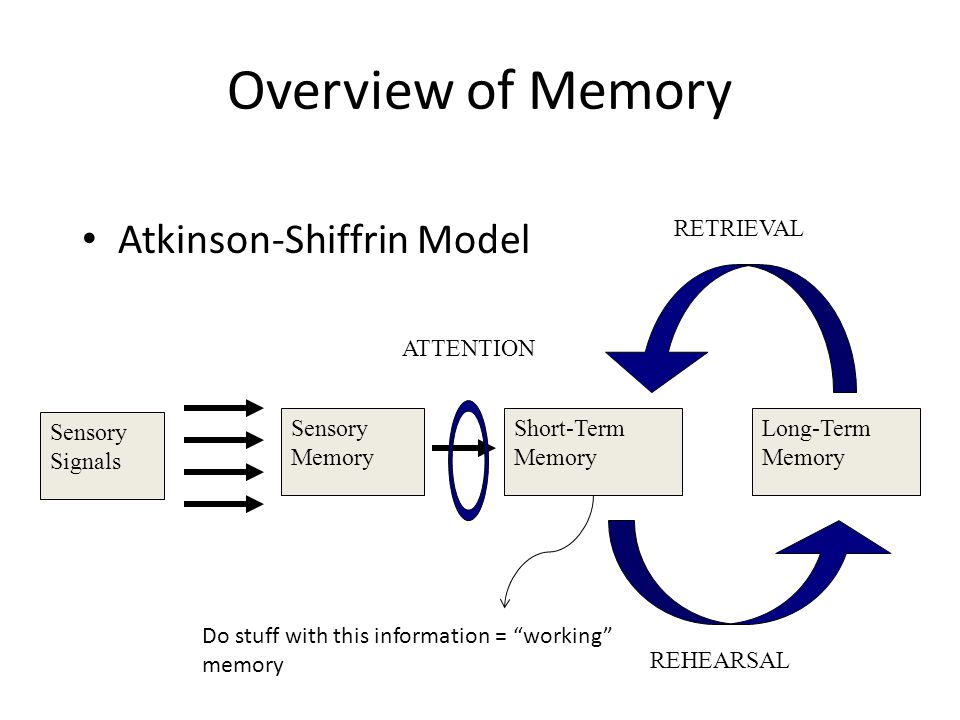 Overview of Memory Atkinson-Shiffrin Model Sensory Signals Sensory Memory Short-Term Memory Long-Term Memory ATTENTION REHEARSAL RETRIEVAL Do stuff with this information = working memory