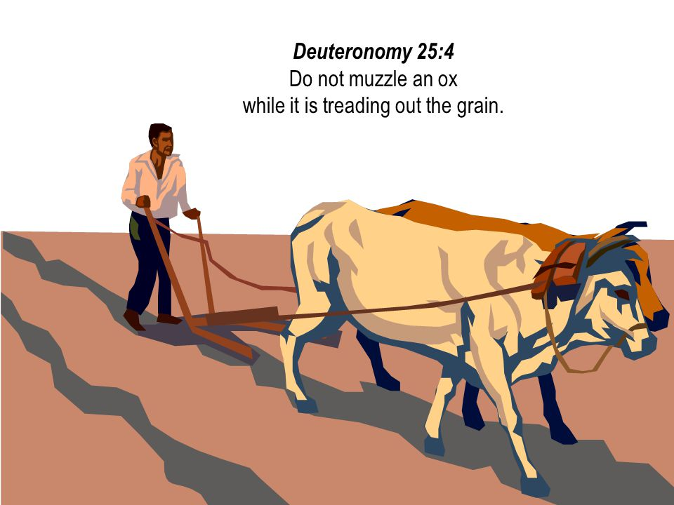 Deuteronomy 25:4 Do not muzzle an ox while it is treading out the grain.