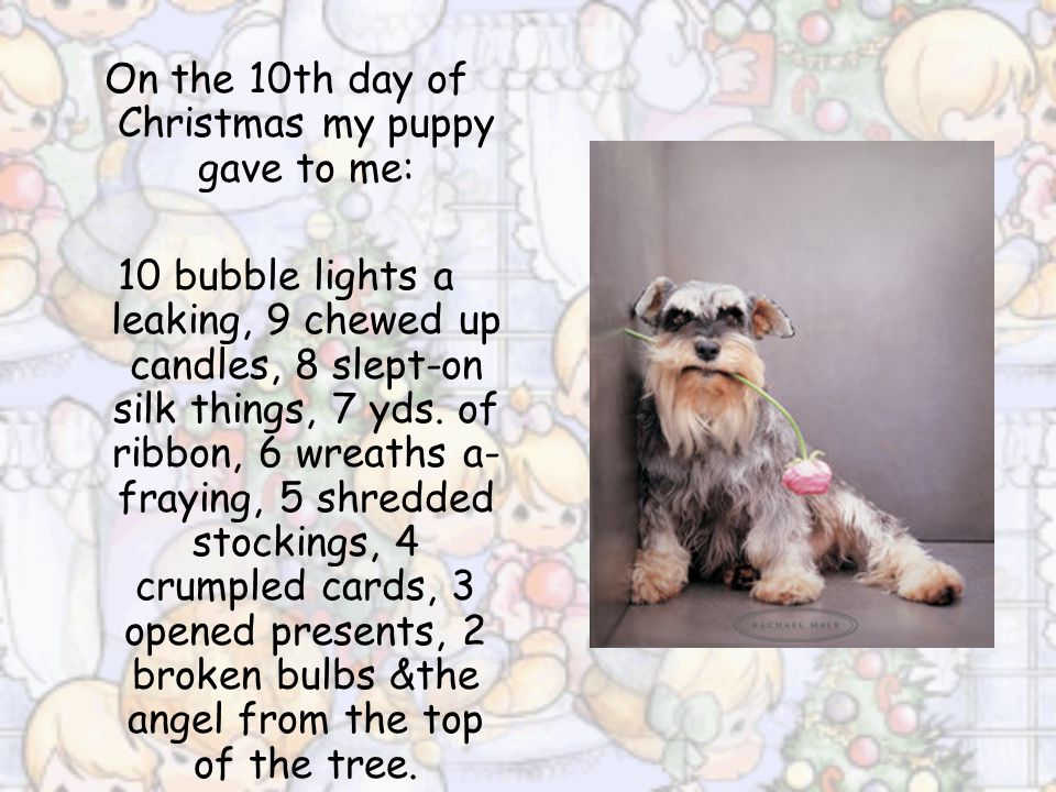 On the 9th day of Christmas my puppy gave to me: 9 chewed up candles, 8 slept-on silk things, 7 yds. of ribbon, 6 wreaths a-fraying, 5 shredded stocki