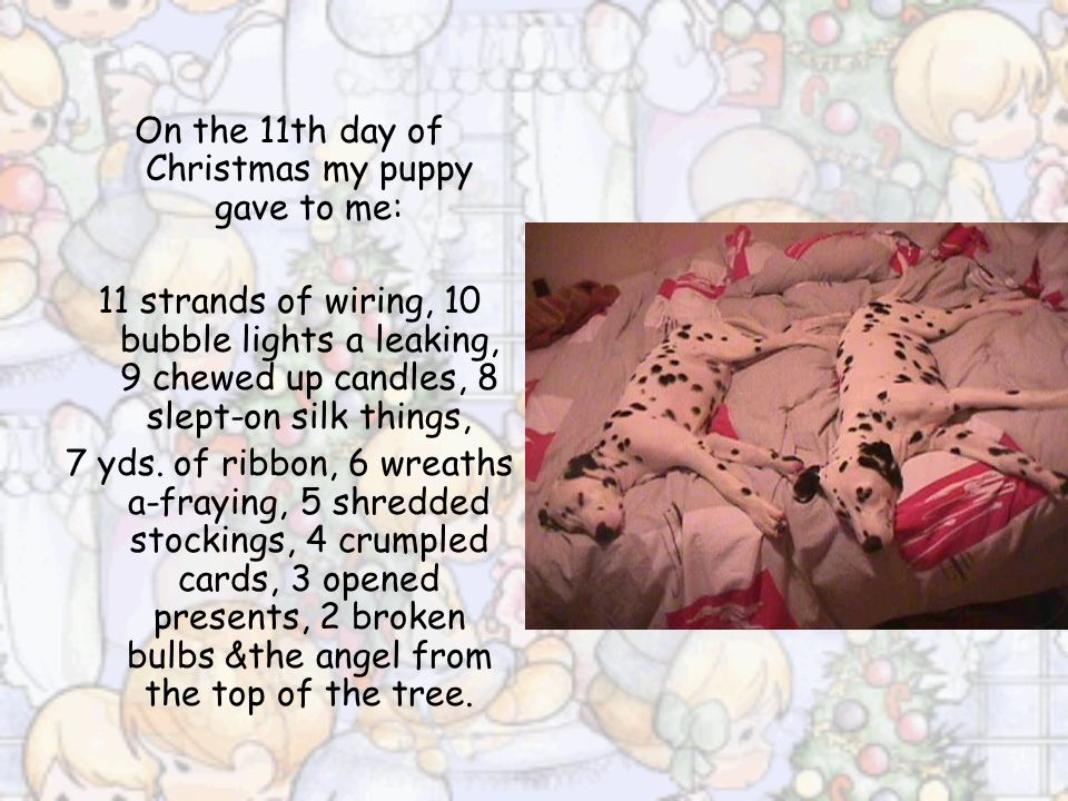 On the 10th day of Christmas my puppy gave to me: 10 bubble lights a leaking, 9 chewed up candles, 8 slept-on silk things, 7 yds. of ribbon, 6 wreaths