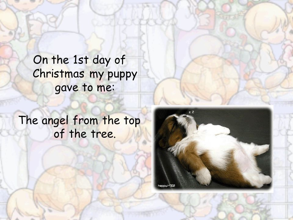 On the 1st day of Christmas my puppy gave to me: The angel from the top of the tree.