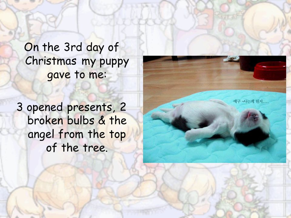 On the 3rd day of Christmas my puppy gave to me: 3 opened presents, 2 broken bulbs & the angel from the top of the tree.