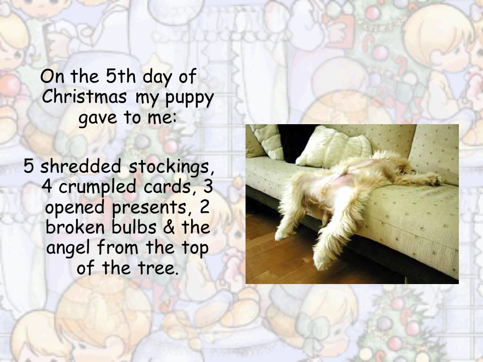On the 5th day of Christmas my puppy gave to me: 5 shredded stockings, 4 crumpled cards, 3 opened presents, 2 broken bulbs & the angel from the top of the tree.
