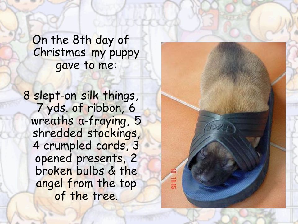 On the 7th day of Christmas my puppy gave to me: 7 yds. of ribbon, 6 wreaths a-fraying, 5 shredded stockings, 4 crumpled cards, 3 opened presents, 2 b