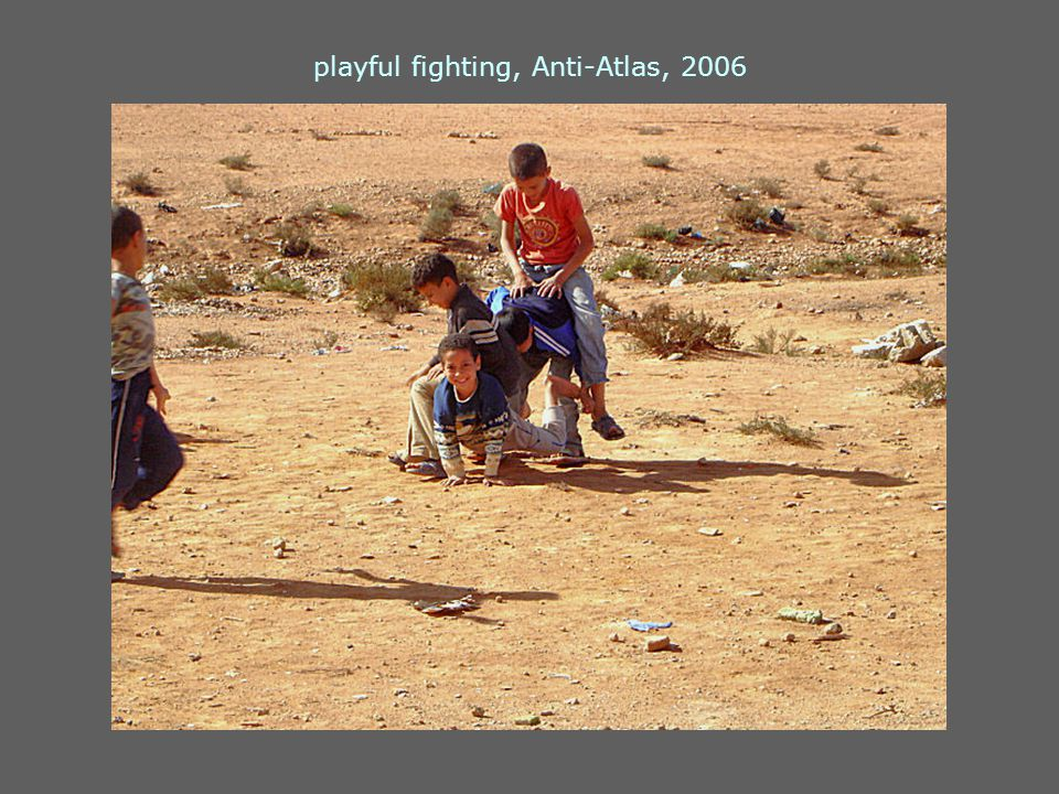 playful fighting, Anti-Atlas, 2006