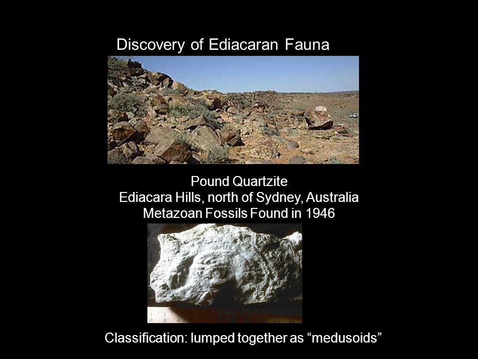 Pound Quartzite Ediacara Hills, north of Sydney, Australia Metazoan Fossils Found in 1946 Discovery of Ediacaran Fauna Classification: lumped together
