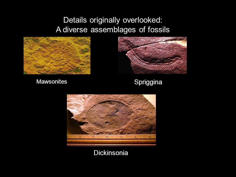 Dickinsonia Mawsonites Spriggina Details originally overlooked: A diverse assemblages of fossils