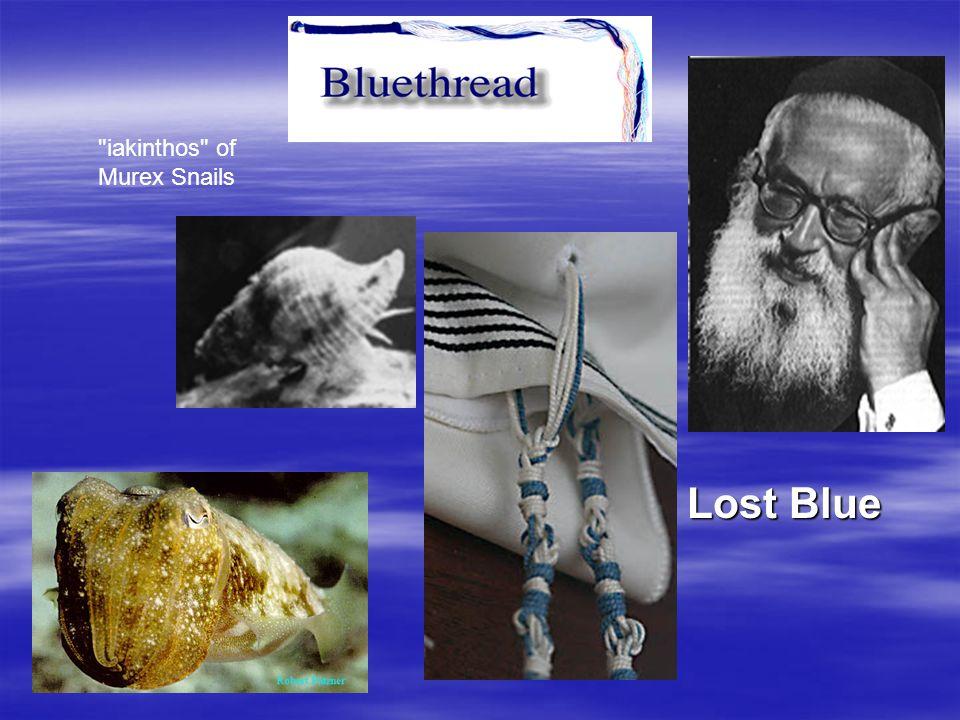 iakinthos of Murex Snails Lost Blue