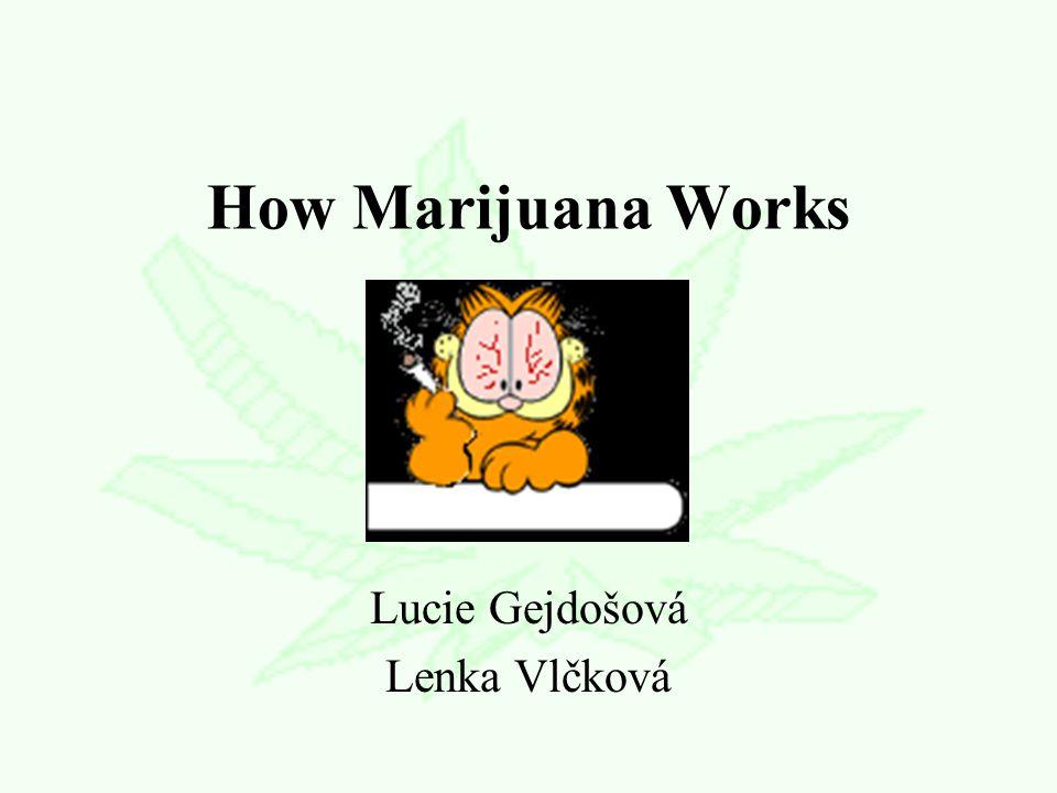 How Marijuana Works Lucie Gejdošová Lenka Vlčková