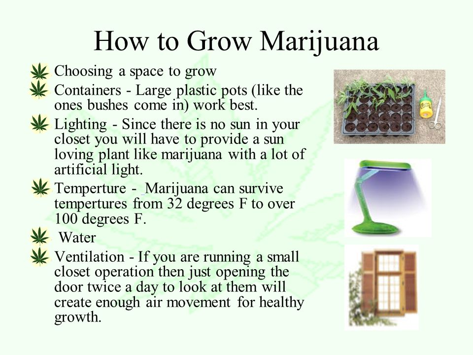 How to Grow Marijuana Choosing a space to grow Containers - Large plastic pots (like the ones bushes come in) work best.