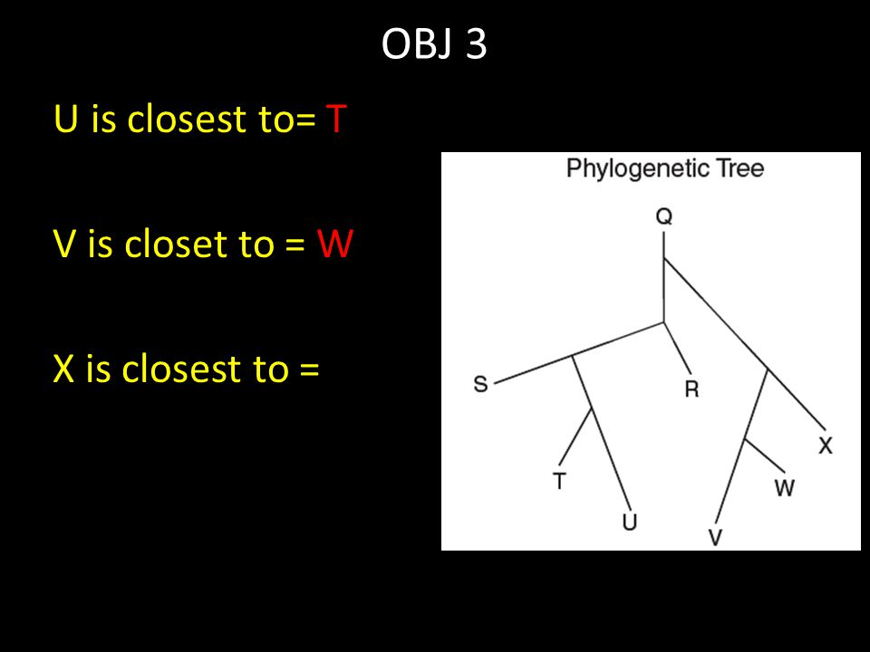 OBJ 3 U is closest to= T V is closet to = W X is closest to =