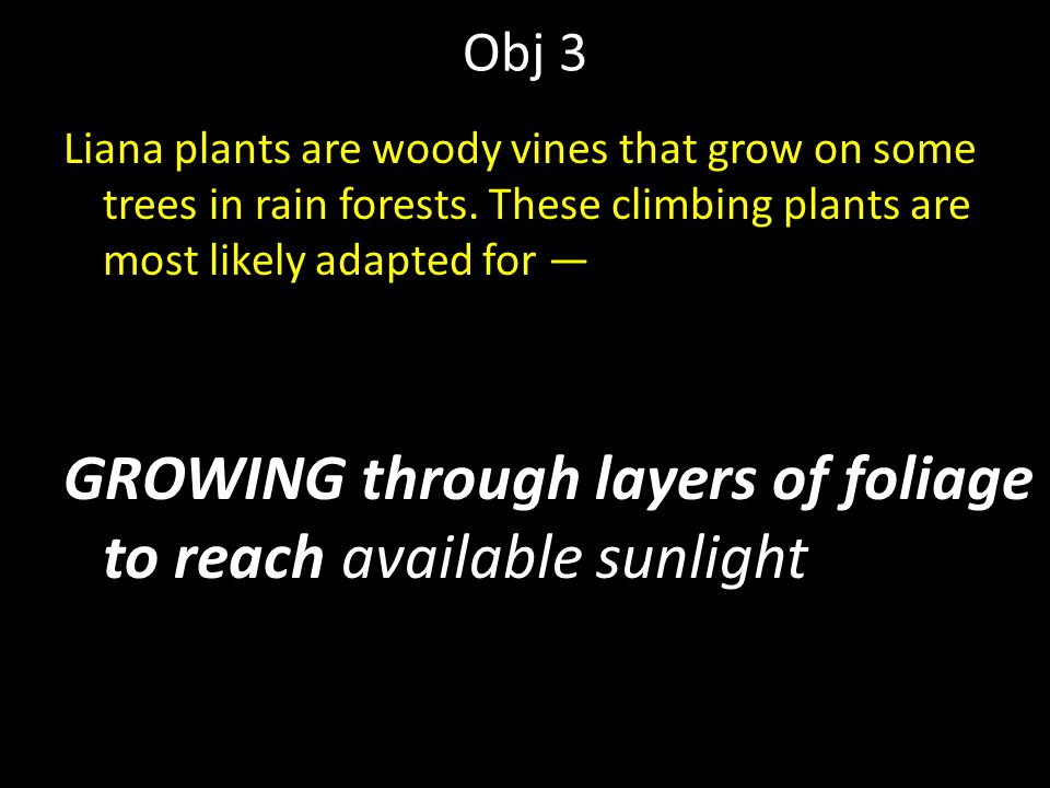 Obj 3 Liana plants are woody vines that grow on some trees in rain forests. These climbing plants are most likely adapted for — GROWING through layers