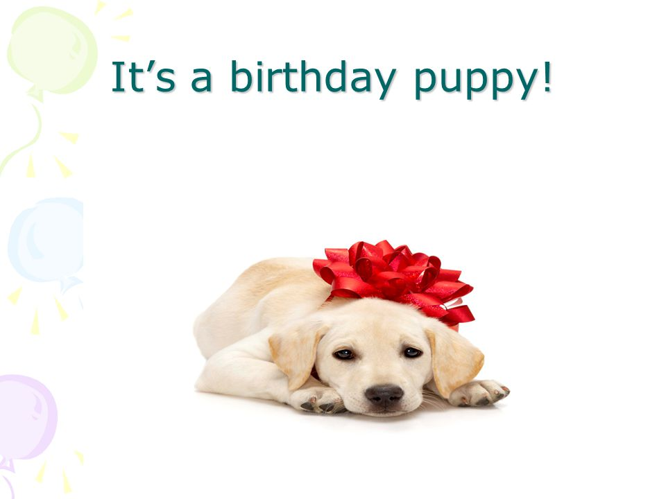 It's a birthday puppy!