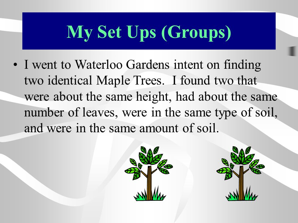 My Set Ups (Groups) I went to Waterloo Gardens intent on finding two identical Maple Trees. I found two that were about the same height, had about the