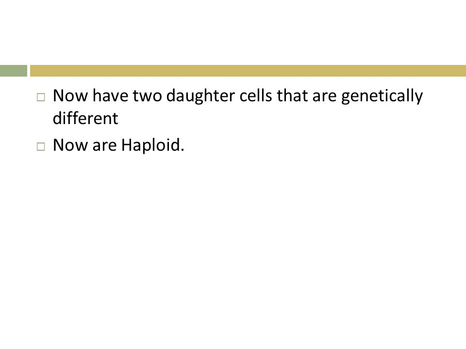  Now have two daughter cells that are genetically different  Now are Haploid.