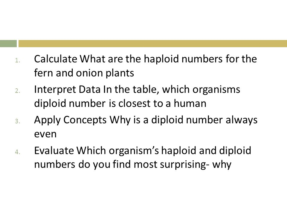 1. Calculate What are the haploid numbers for the fern and onion plants 2. Interpret Data In the table, which organisms diploid number is closest to a