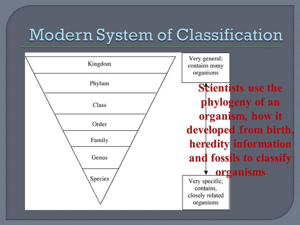 Scientists use the phylogeny of an organism, how it developed from birth, heredity information and fossils to classify organisms