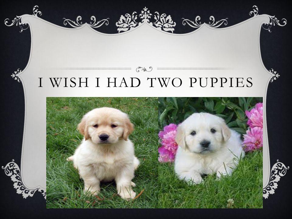 I WISH I HAD TWO PUPPIES